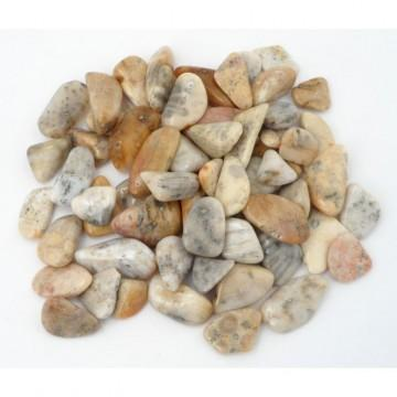 Agatisert korall